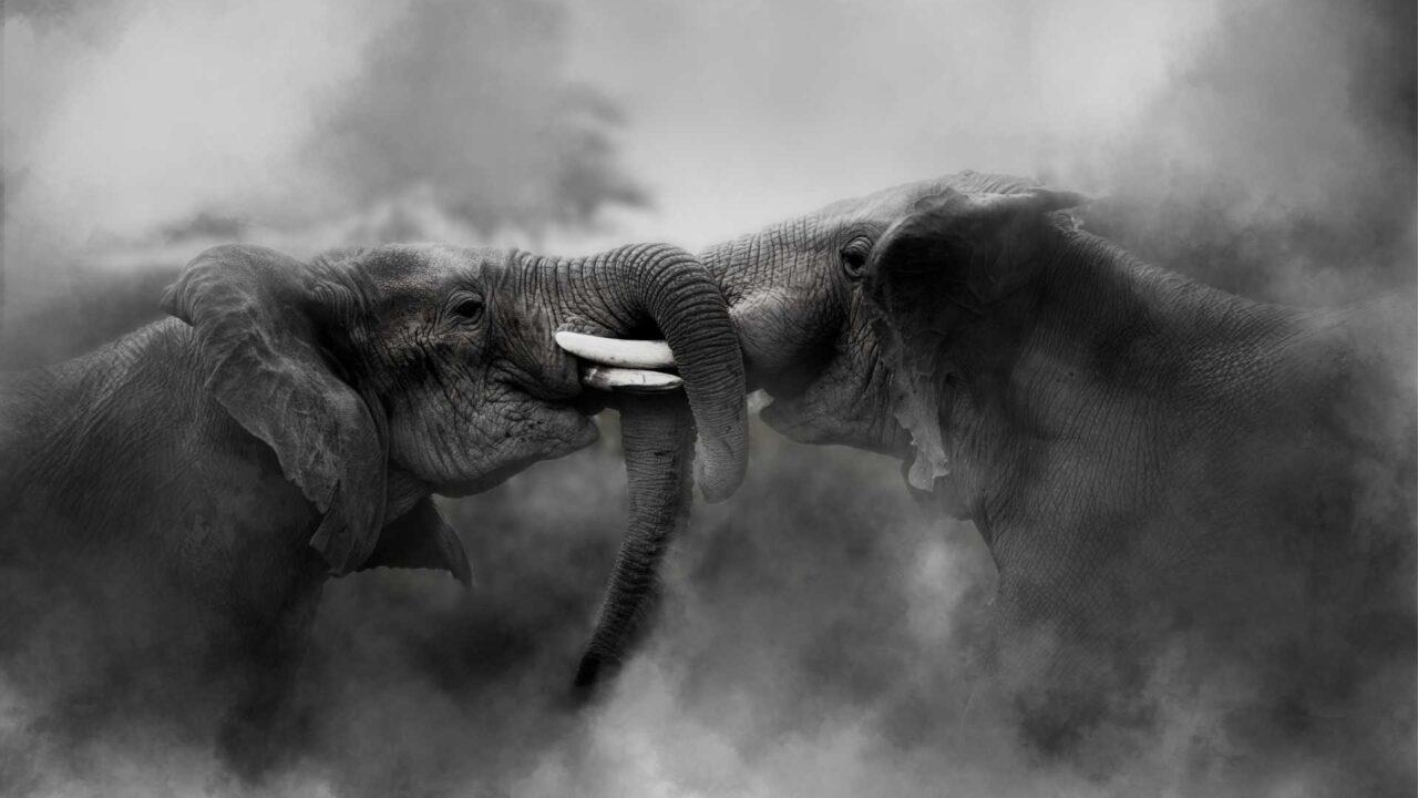 https://heritagewealth.co.za/wp-content/uploads/2020/12/When-Elephants-Fight-1280x720.jpg