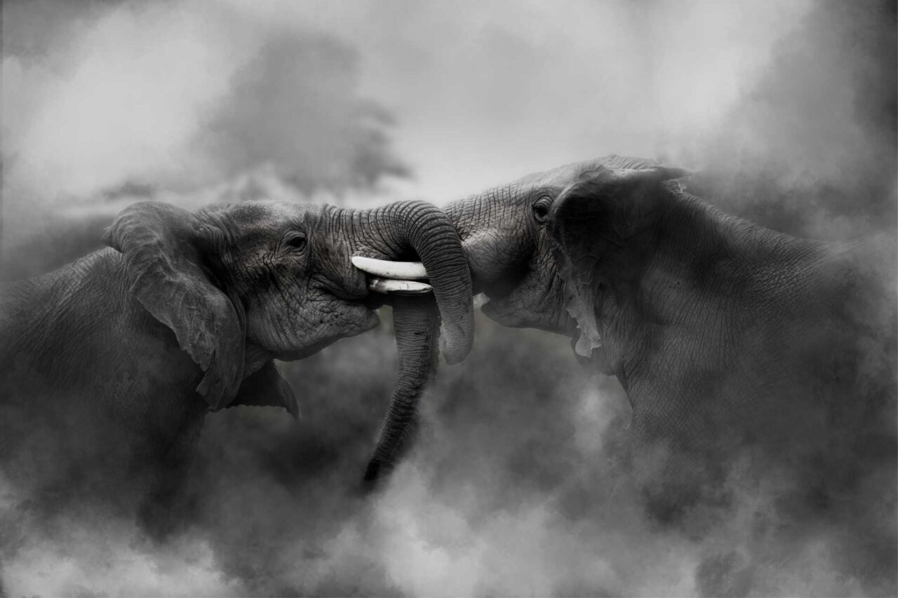 https://heritagewealth.co.za/wp-content/uploads/2020/12/When-Elephants-Fight-1280x853.jpg